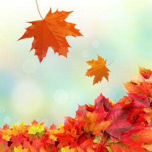 Днес настъпва есента – да се подготвим за нея